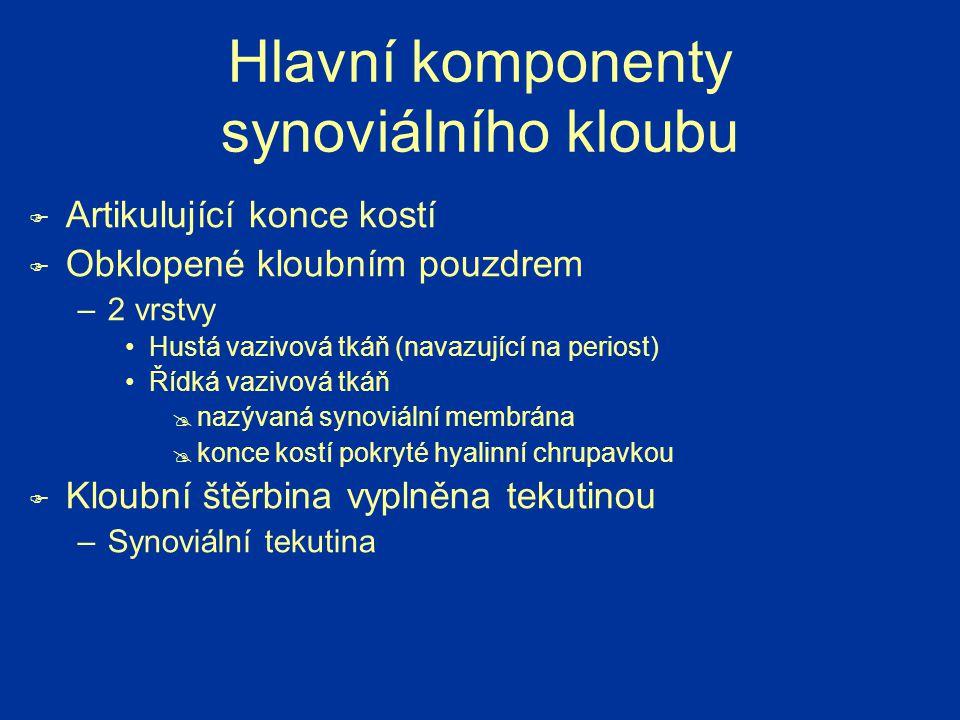 Hlavní komponenty synoviálního kloubu