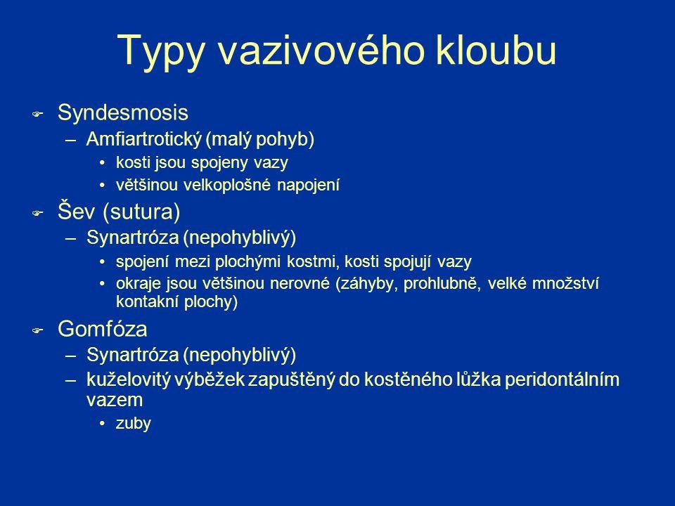 Typy vazivového kloubu