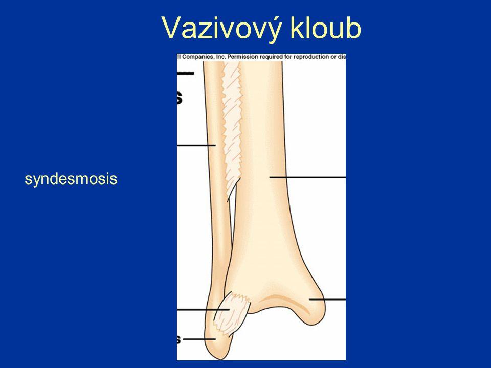 Vazivový kloub syndesmosis