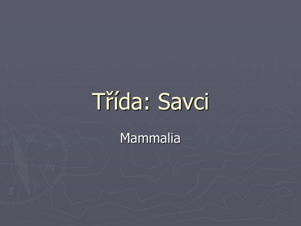 Třída: Savci Mammalia