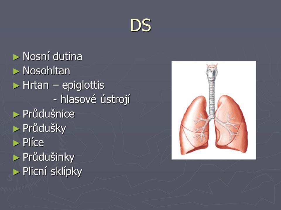 DS Nosní dutina Nosohltan Hrtan – epiglottis - hlasové ústrojí