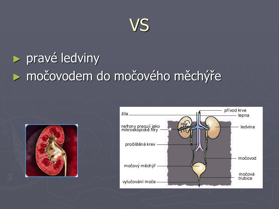 VS pravé ledviny močovodem do močového měchýře