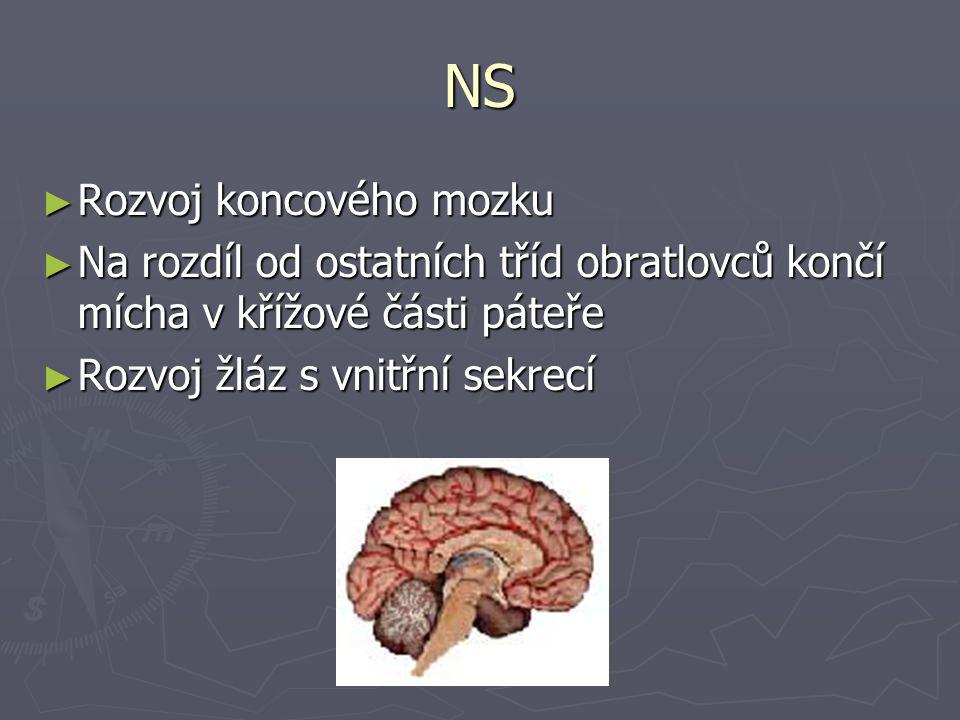 NS Rozvoj koncového mozku