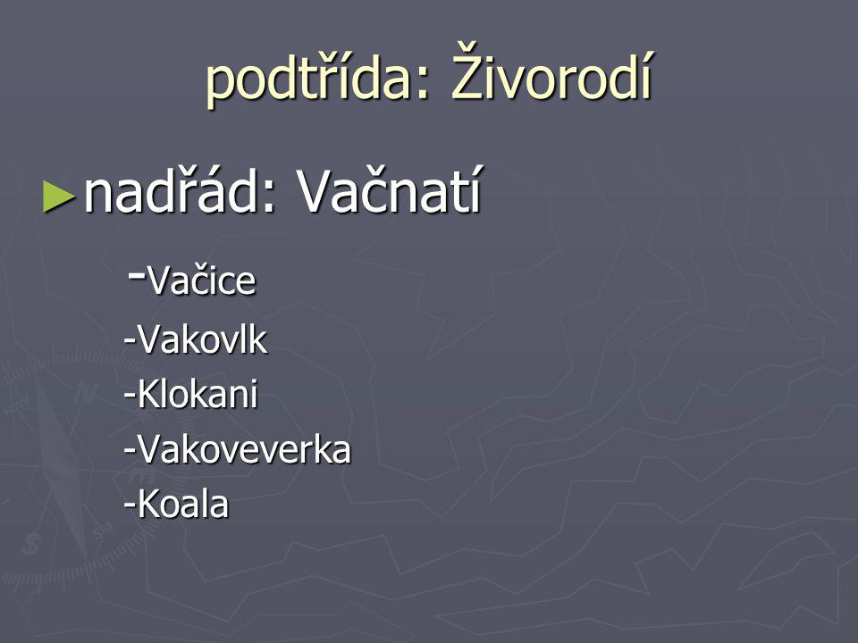podtřída: Živorodí nadřád: Vačnatí -Vačice -Vakovlk -Klokani