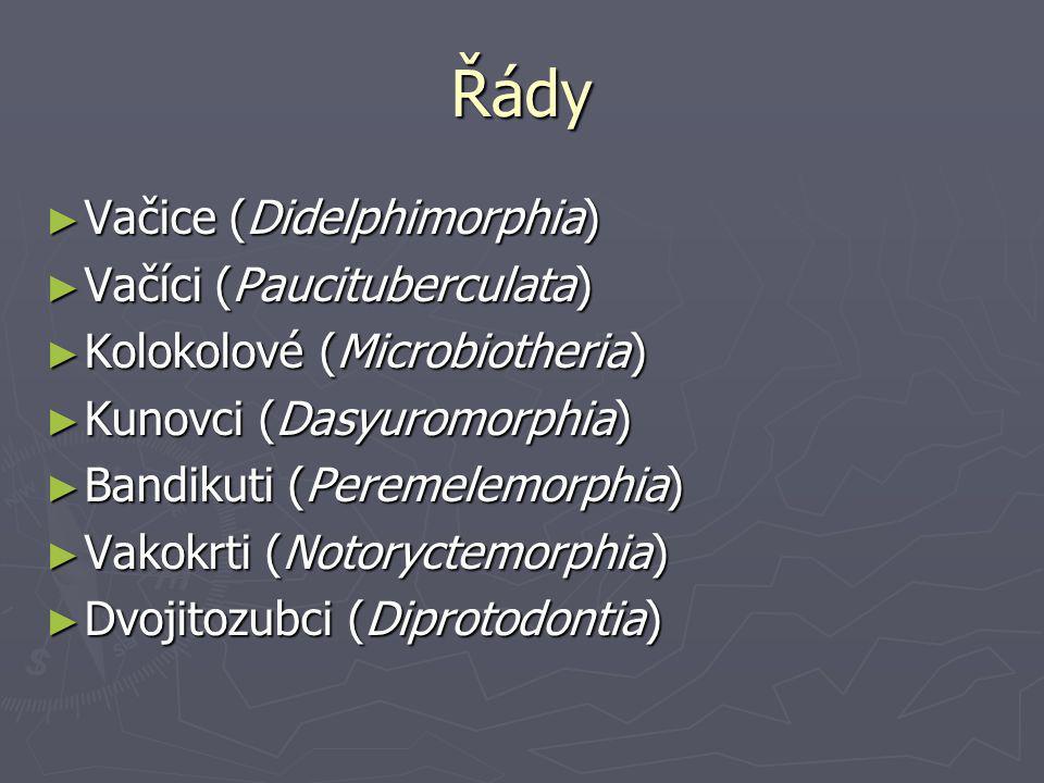 Řády Vačice (Didelphimorphia) Vačíci (Paucituberculata)