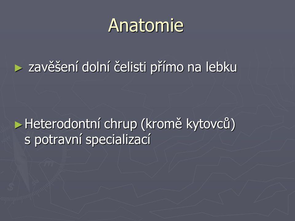 Anatomie zavěšení dolní čelisti přímo na lebku