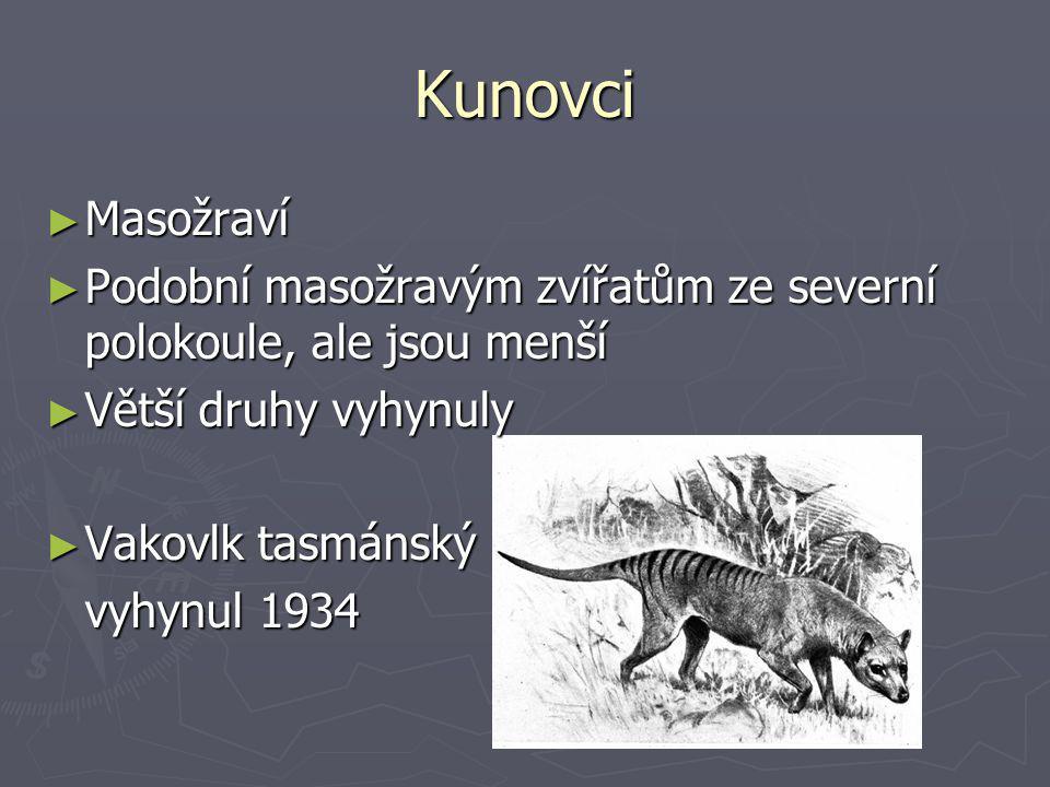 Kunovci Masožraví. Podobní masožravým zvířatům ze severní polokoule, ale jsou menší. Větší druhy vyhynuly.