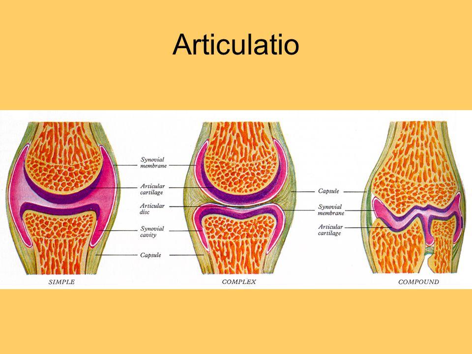 Articulatio