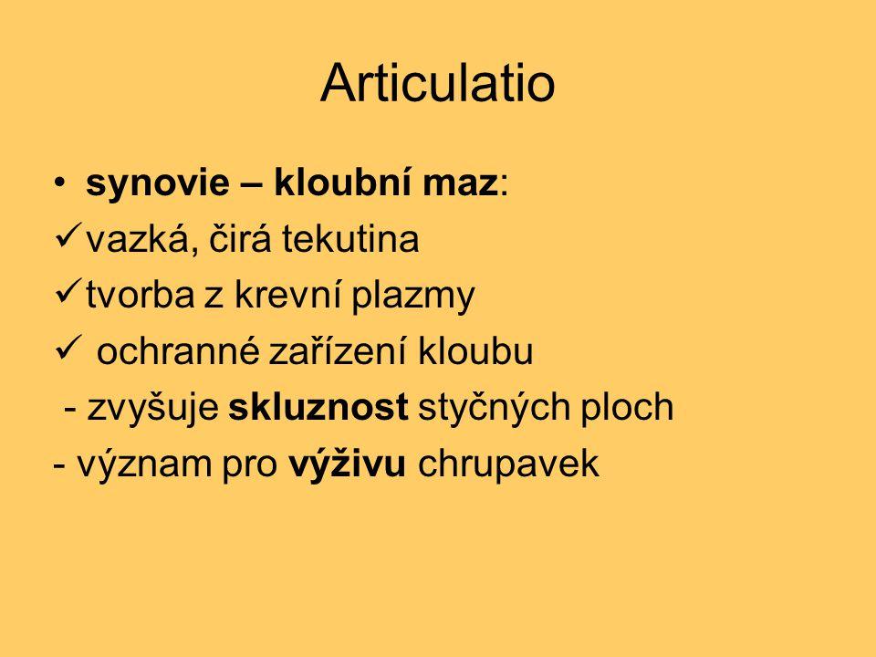 Articulatio synovie – kloubní maz: vazká, čirá tekutina