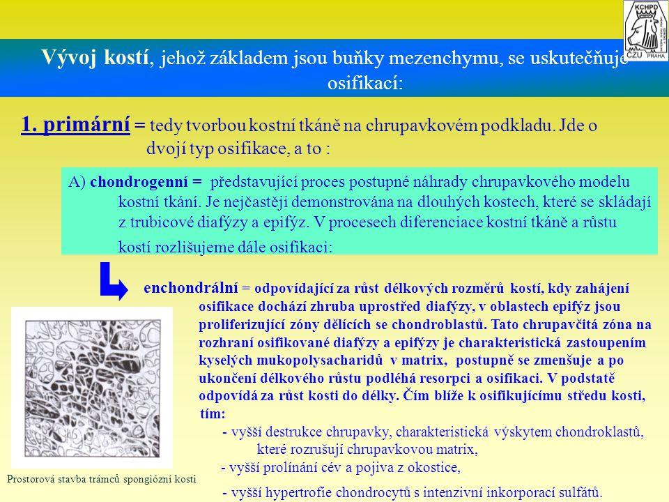Vývoj kostí, jehož základem jsou buňky mezenchymu, se uskutečňuje