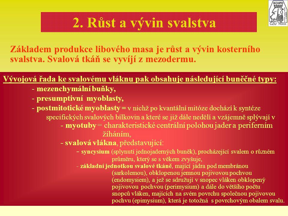 2. Růst a vývin svalstva Základem produkce libového masa je růst a vývin kosterního svalstva. Svalová tkáň se vyvíjí z mezodermu.