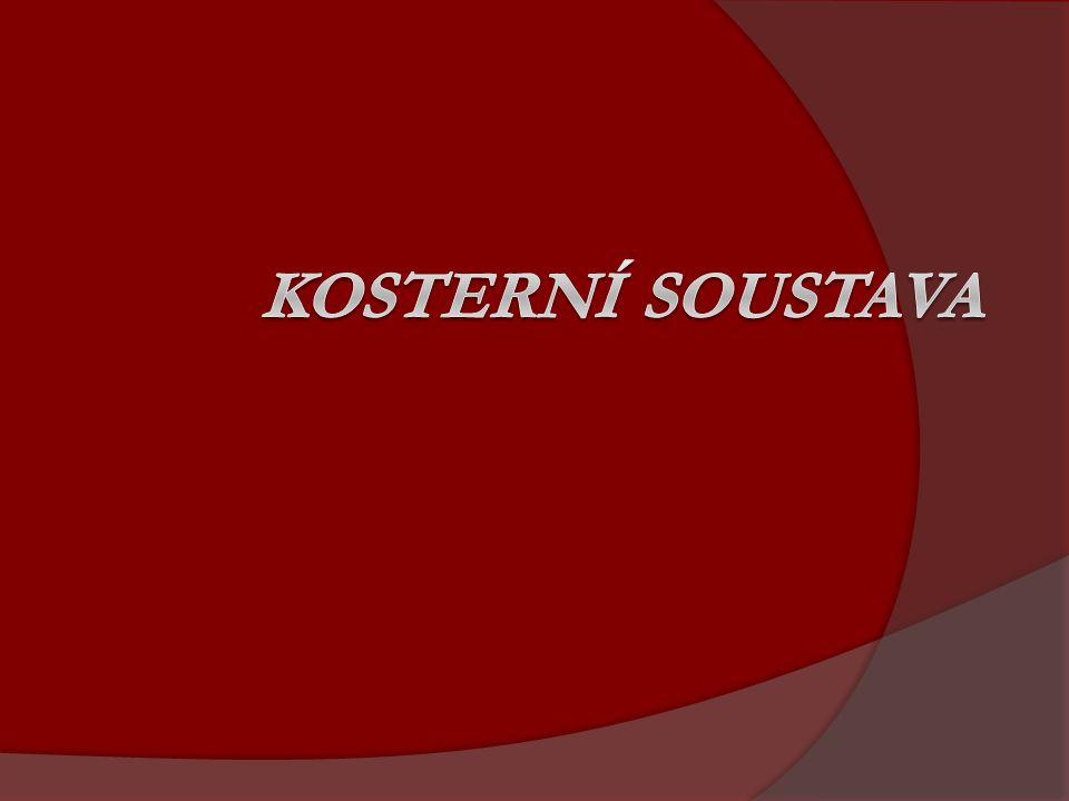 KOSTERNÍ SOUSTAVA