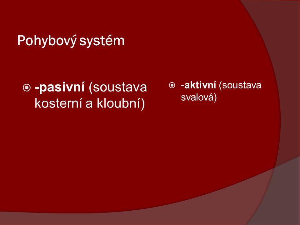 Pohybový systém -pasivní (soustava kosterní a kloubní)