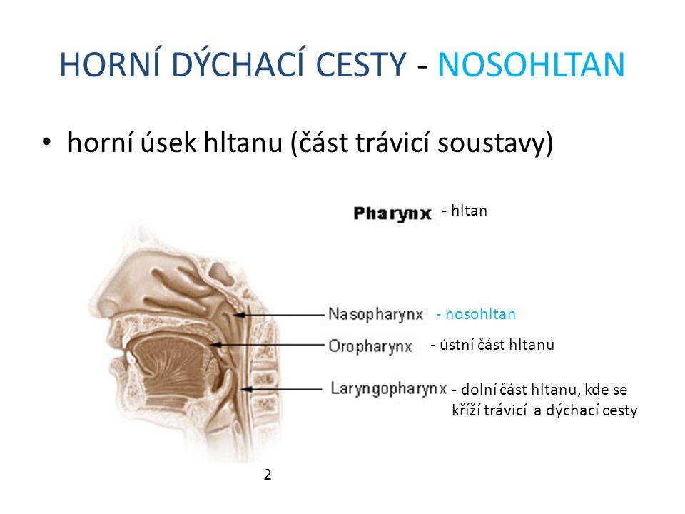 HORNÍ DÝCHACÍ CESTY - NOSOHLTAN