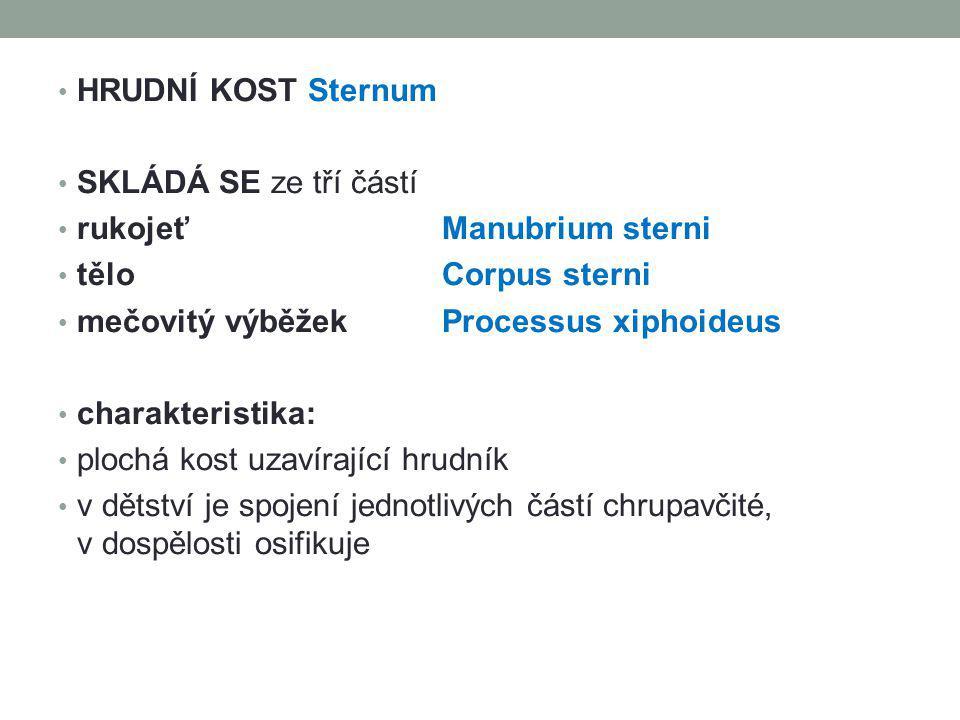 HRUDNÍ KOST Sternum SKLÁDÁ SE ze tří částí. rukojeť Manubrium sterni. tělo Corpus sterni. mečovitý výběžek Processus xiphoideus.