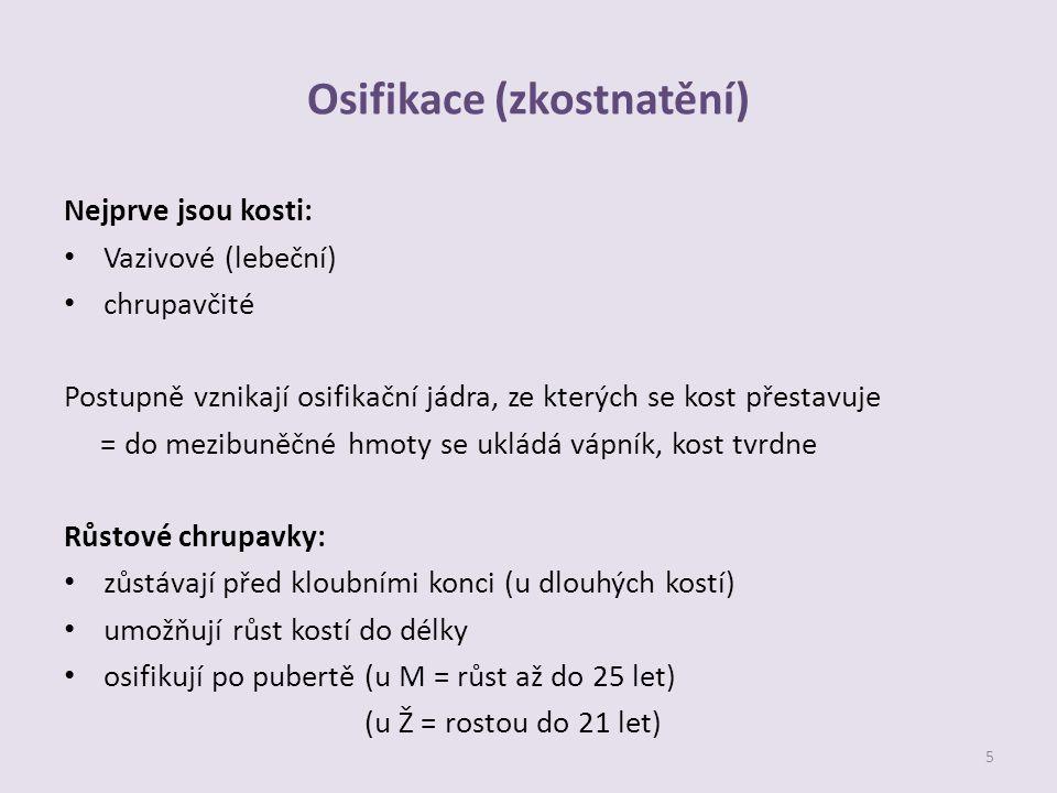 Osifikace (zkostnatění)