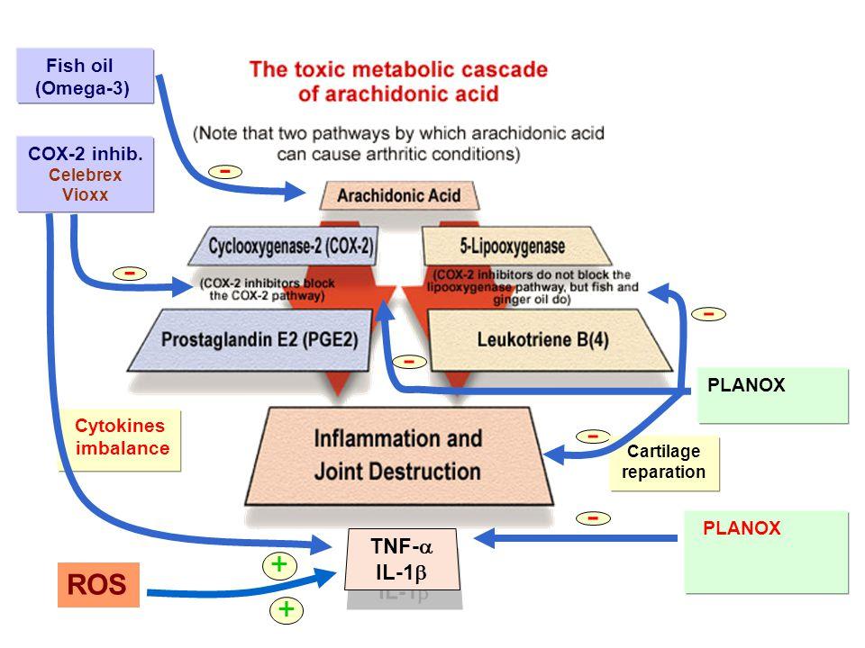 - - - - - ROS + + TNF-a IL-1b Fish oil (Omega-3) COX-2 inhib. PLANOX