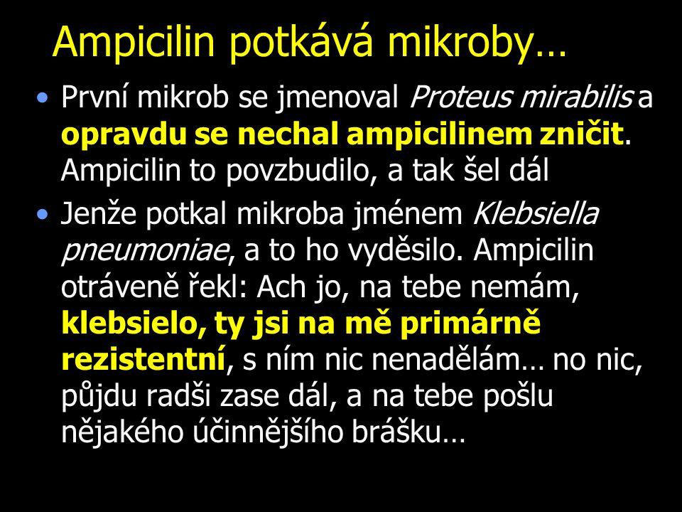 Ampicilin potkává mikroby…