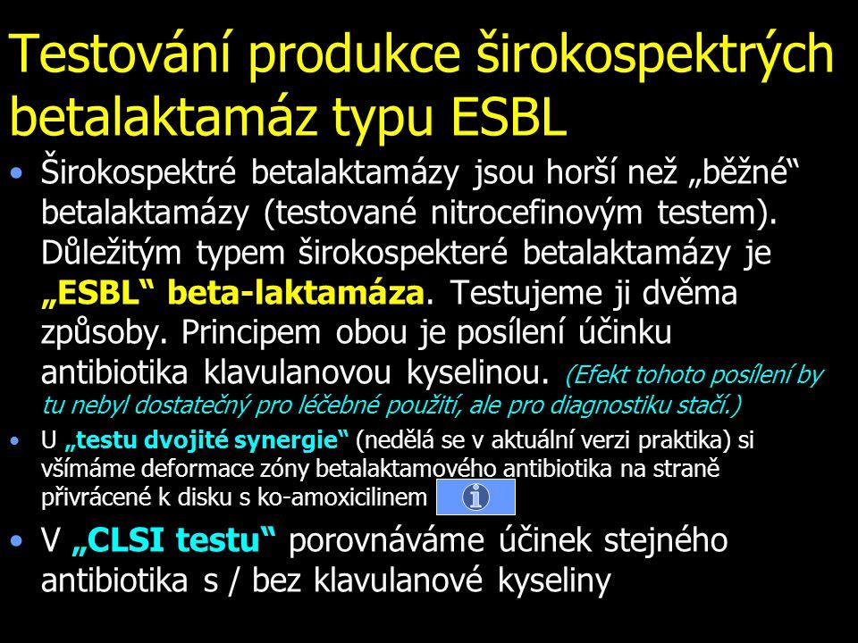Testování produkce širokospektrých betalaktamáz typu ESBL