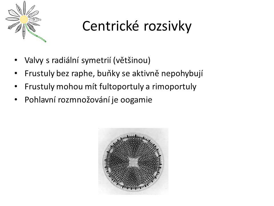 Centrické rozsivky Valvy s radiální symetrií (většinou)