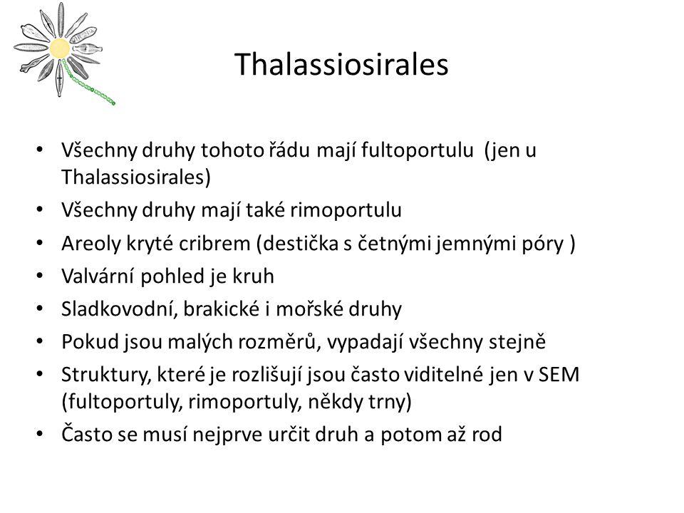 Thalassiosirales Všechny druhy tohoto řádu mají fultoportulu (jen u Thalassiosirales) Všechny druhy mají také rimoportulu.