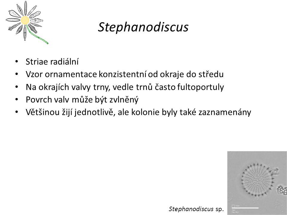 Stephanodiscus Striae radiální
