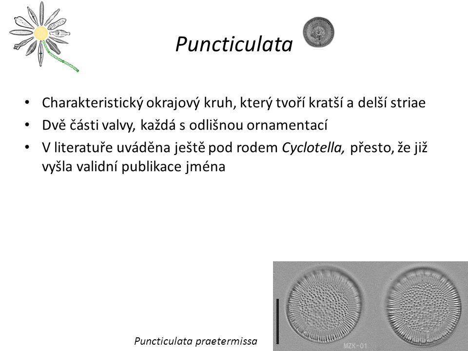 Puncticulata Charakteristický okrajový kruh, který tvoří kratší a delší striae. Dvě části valvy, každá s odlišnou ornamentací.