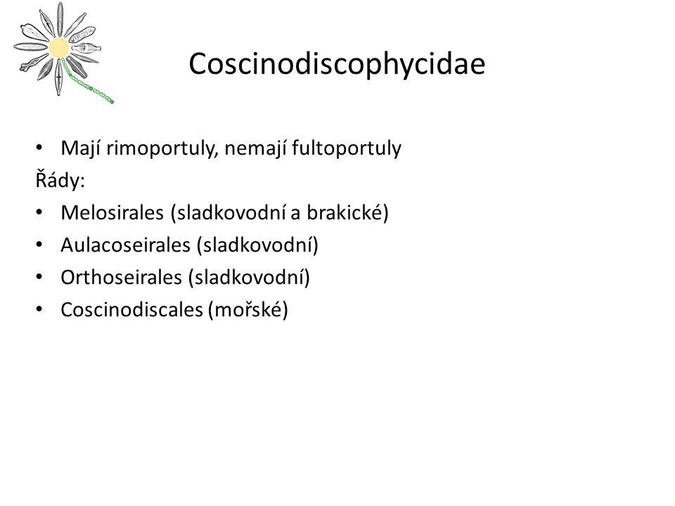 Coscinodiscophycidae
