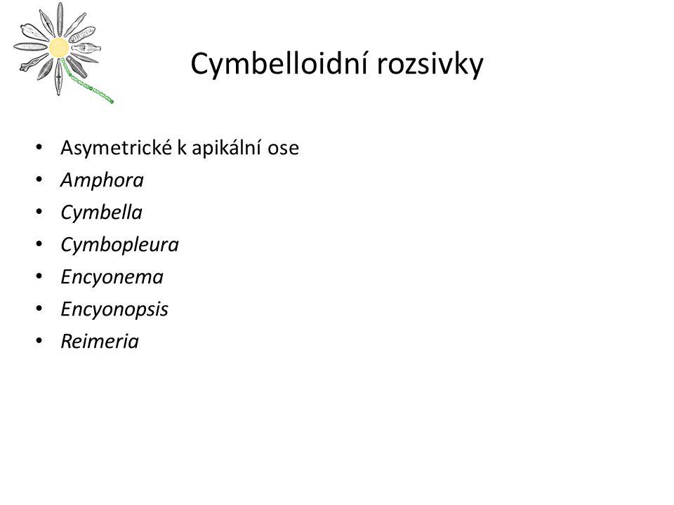 Cymbelloidní rozsivky
