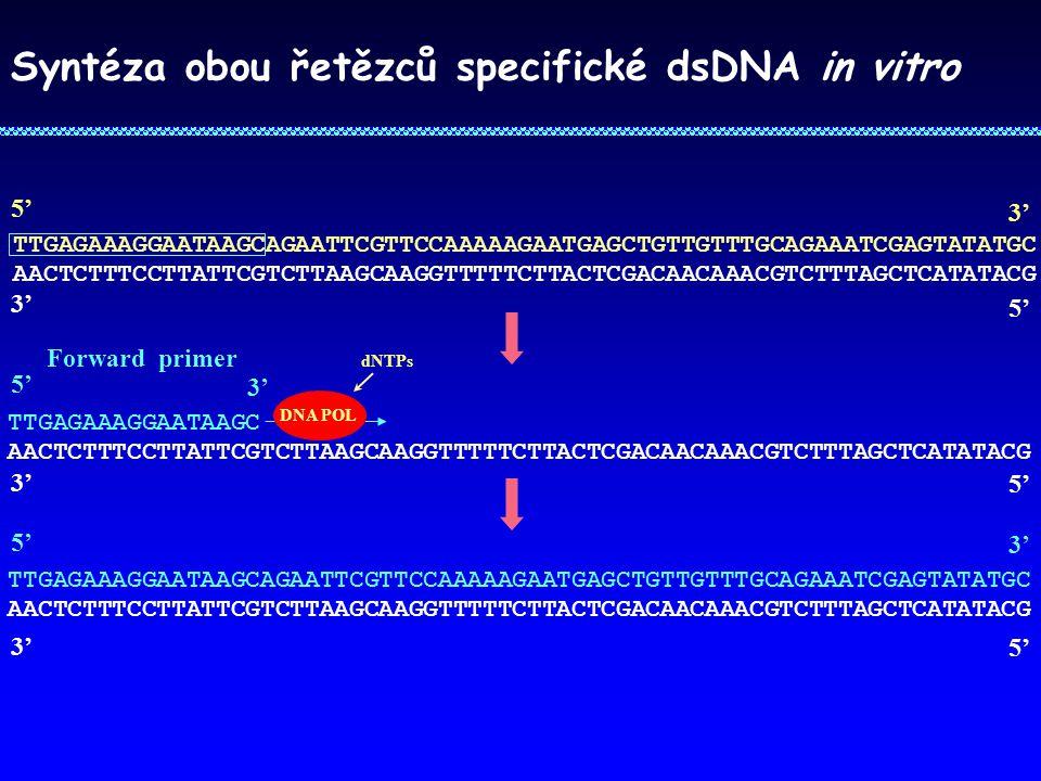 Syntéza obou řetězců specifické dsDNA in vitro