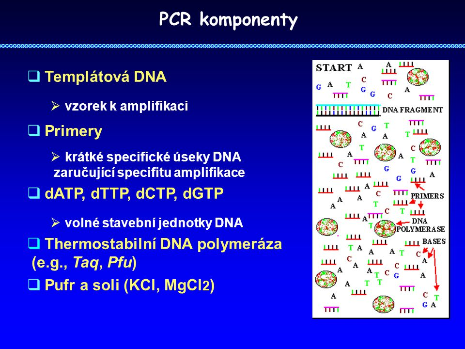 PCR komponenty Templátová DNA Primery dATP, dTTP, dCTP, dGTP