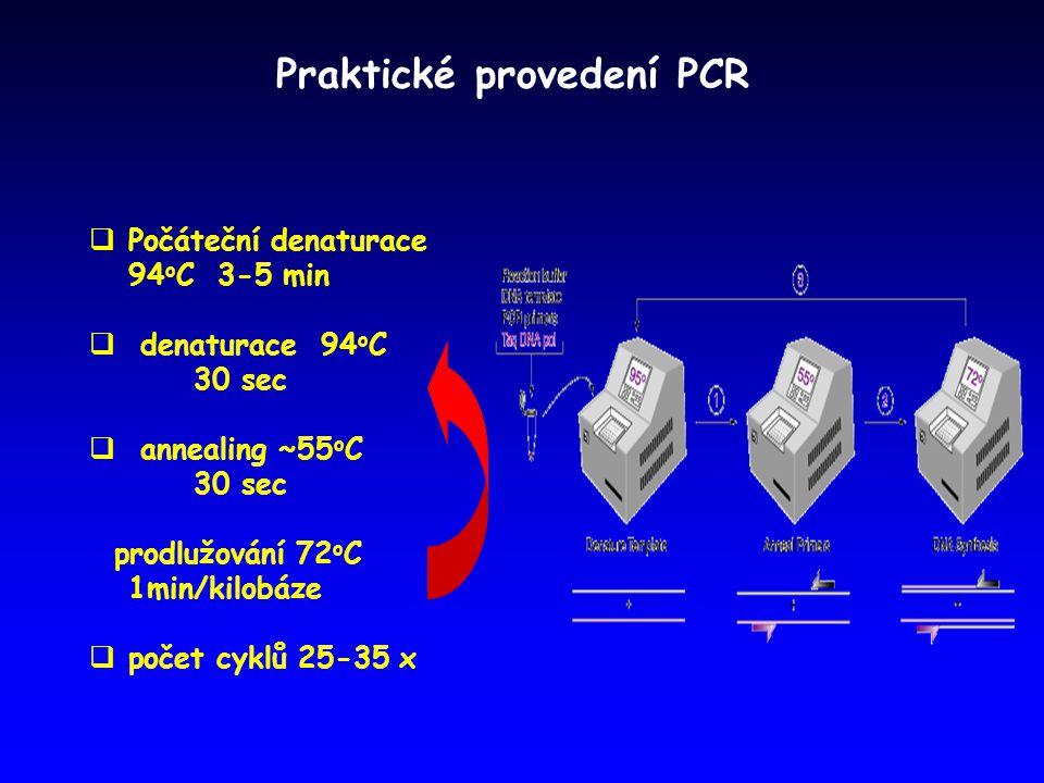 Praktické provedení PCR