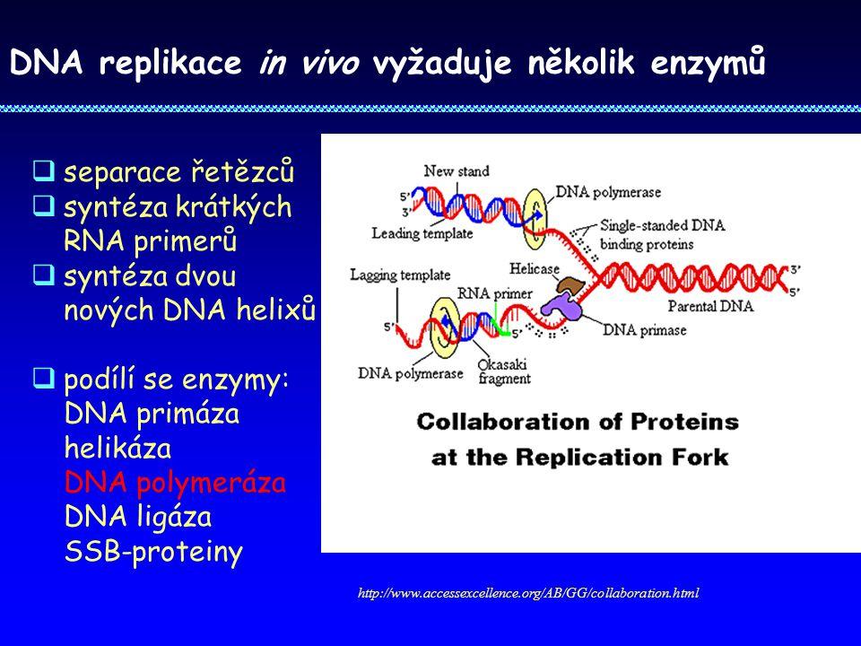 DNA replikace in vivo vyžaduje několik enzymů