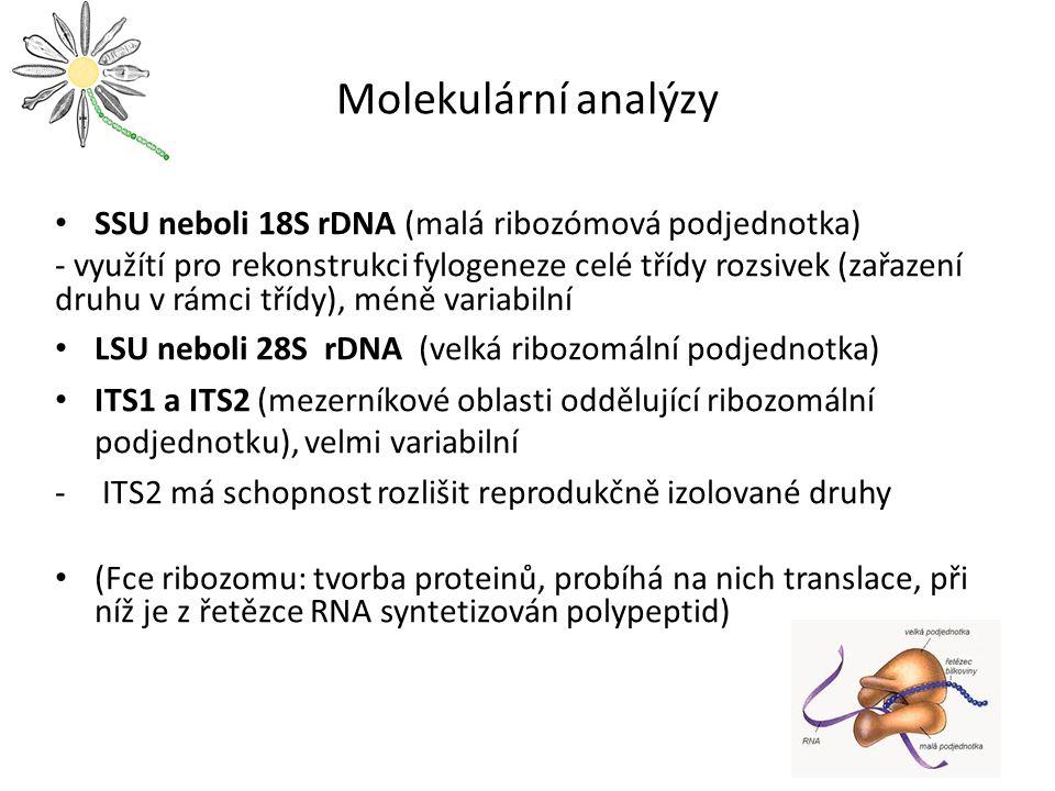 Molekulární analýzy SSU neboli 18S rDNA (malá ribozómová podjednotka)