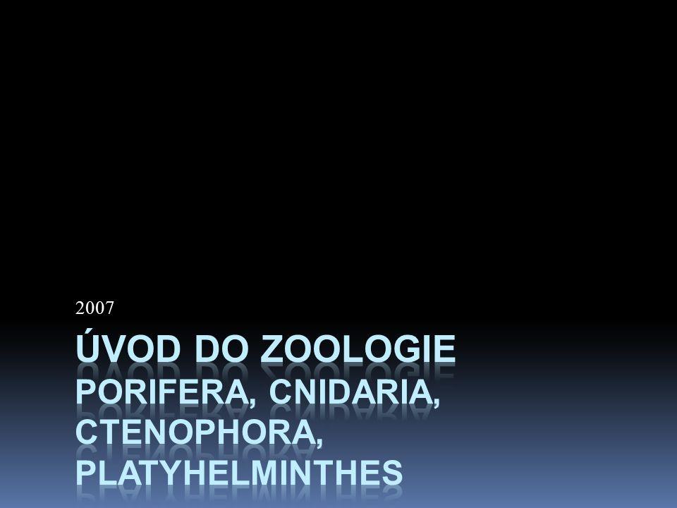 Úvod do zoologie Porifera, Cnidaria, Ctenophora, Platyhelminthes