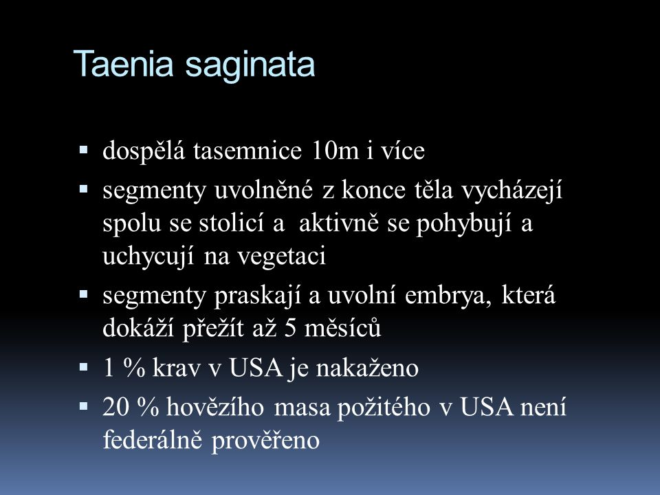 Taenia saginata dospělá tasemnice 10m i více