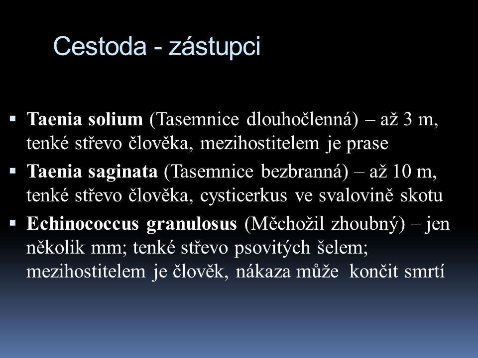 Cestoda - zástupci Taenia solium (Tasemnice dlouhočlenná) – až 3 m, tenké střevo člověka, mezihostitelem je prase.