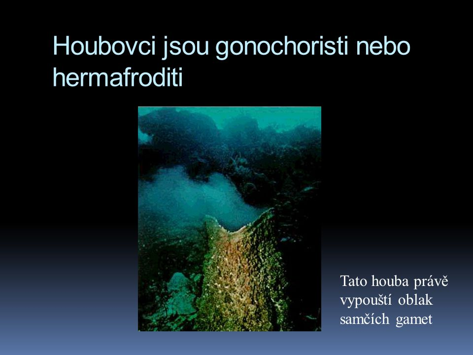 Houbovci jsou gonochoristi nebo hermafroditi