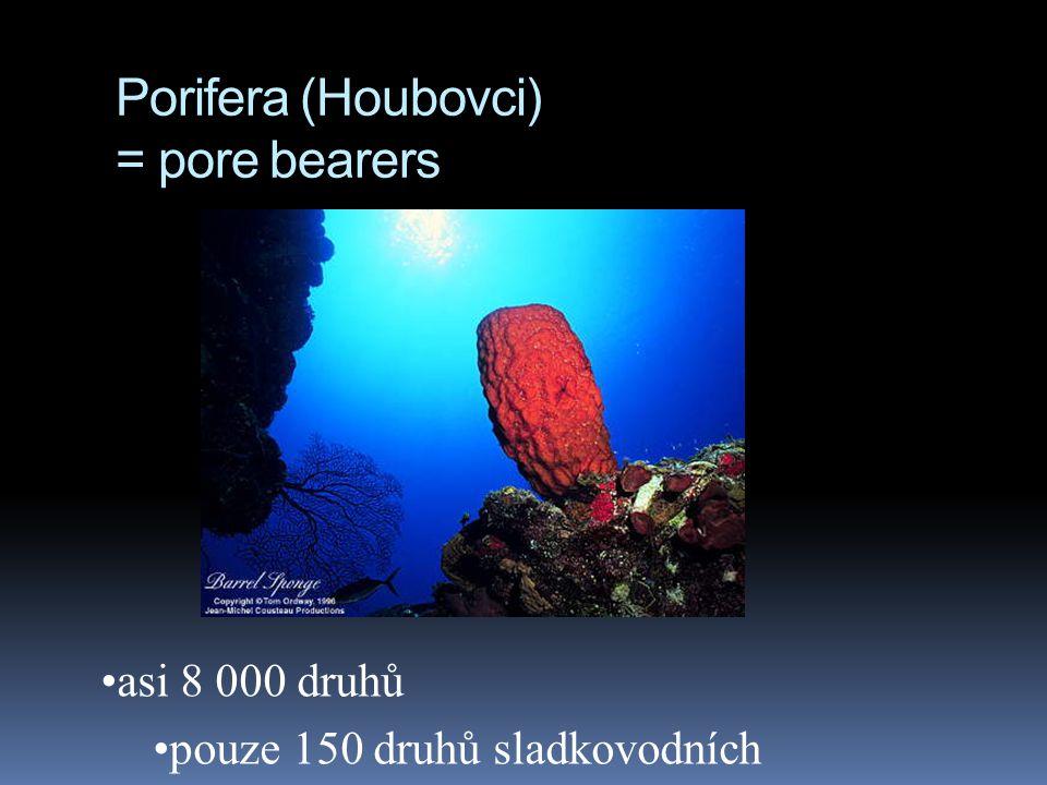 Porifera (Houbovci) = pore bearers