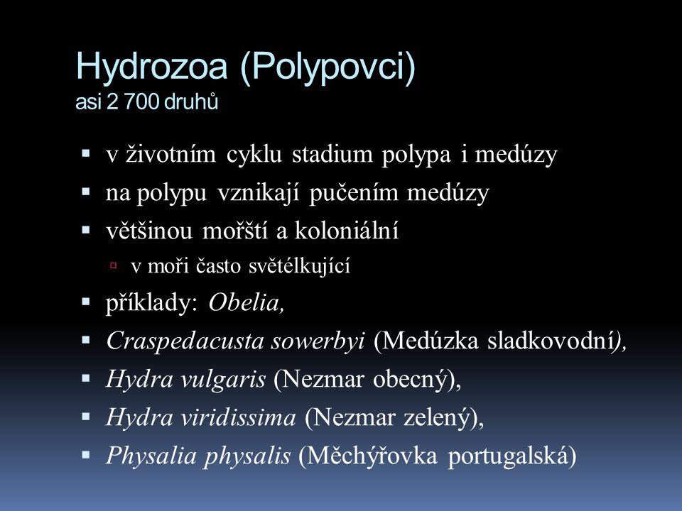 Hydrozoa (Polypovci) asi 2 700 druhů