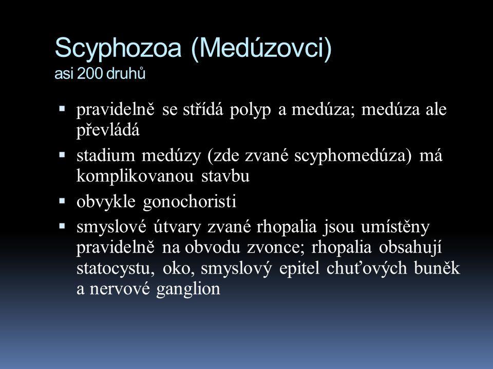 Scyphozoa (Medúzovci) asi 200 druhů