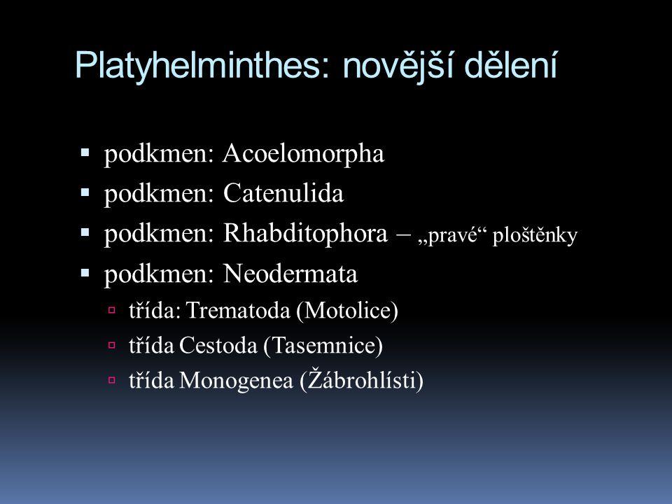 Platyhelminthes: novější dělení