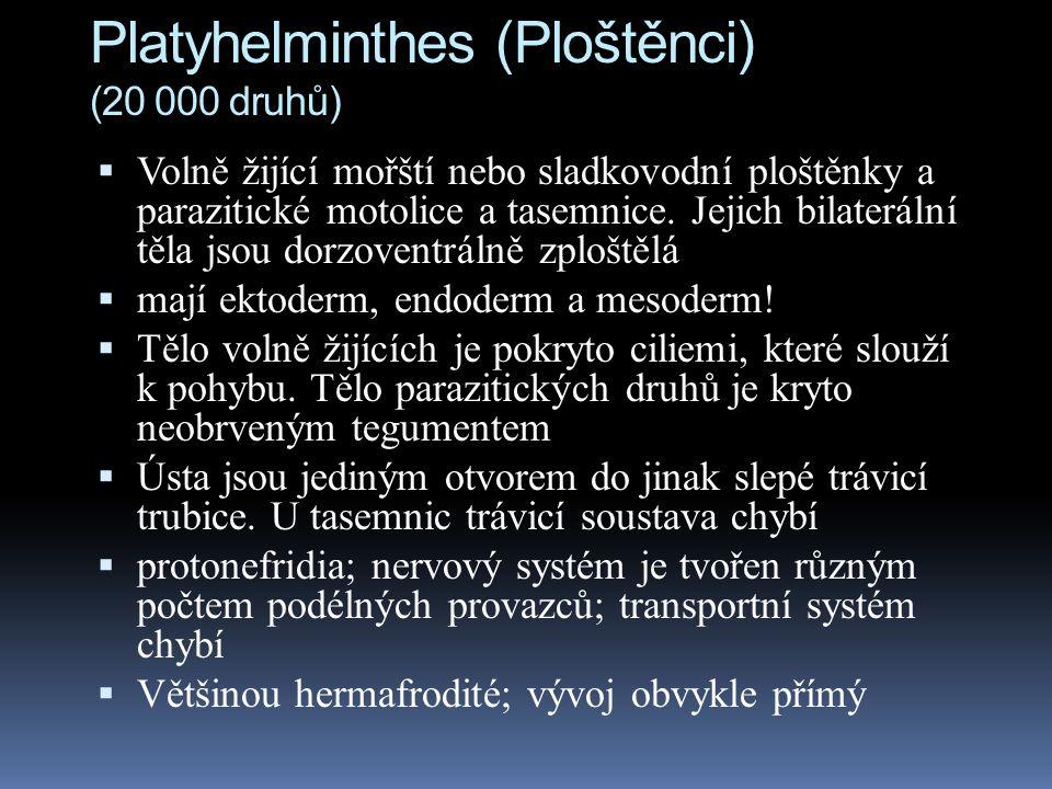 Platyhelminthes (Ploštěnci) (20 000 druhů)