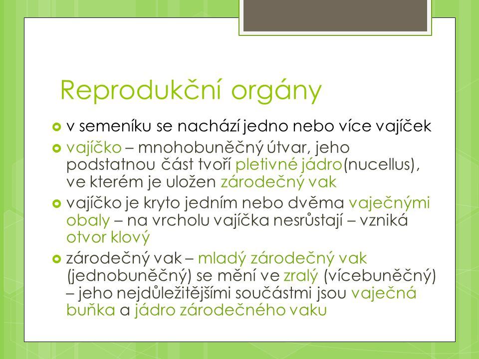 Reprodukční orgány v semeníku se nachází jedno nebo více vajíček