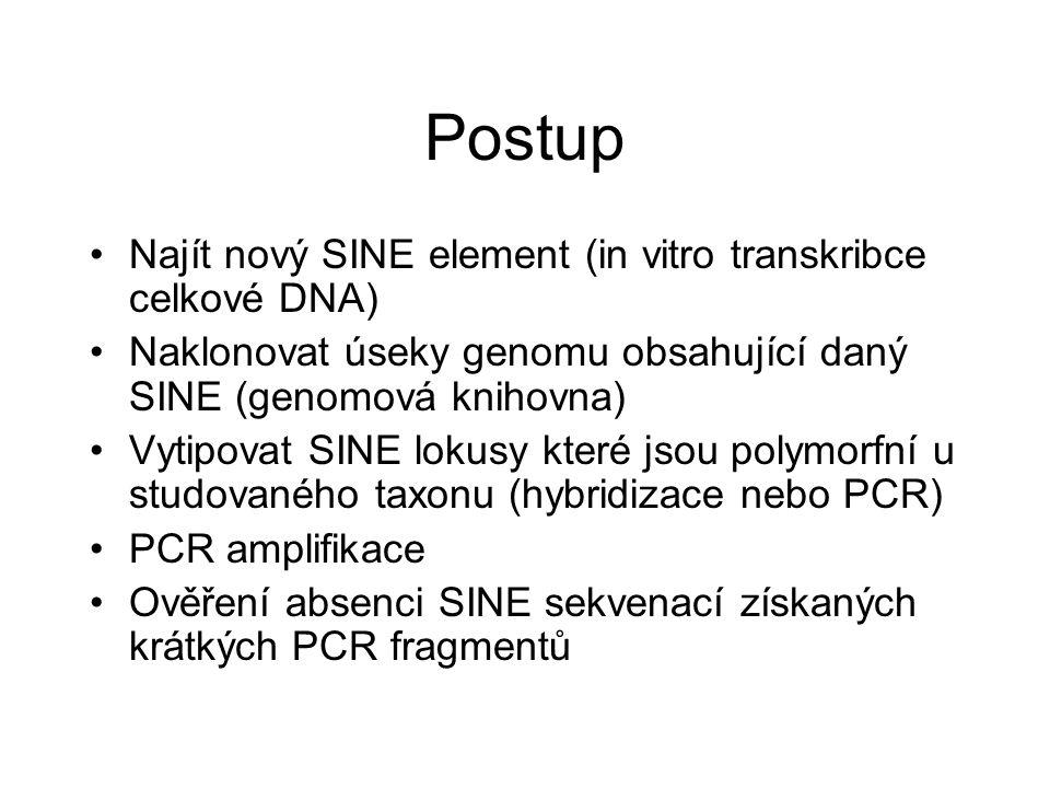 Postup Najít nový SINE element (in vitro transkribce celkové DNA)