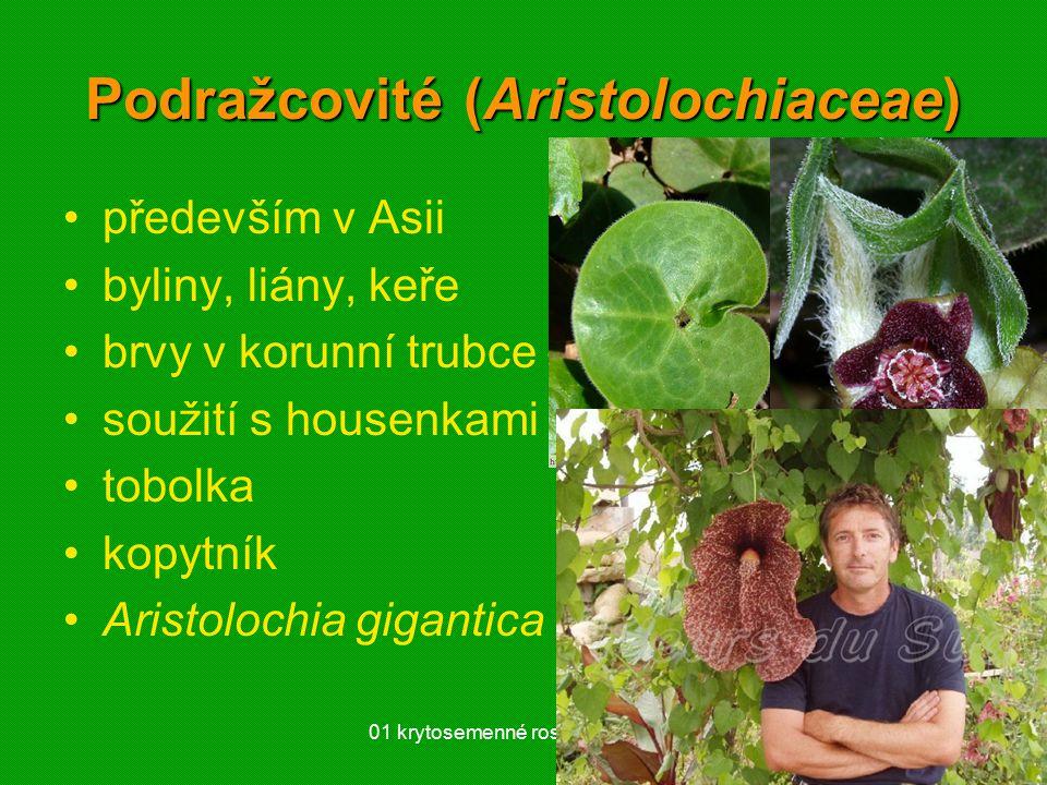Podražcovité (Aristolochiaceae)