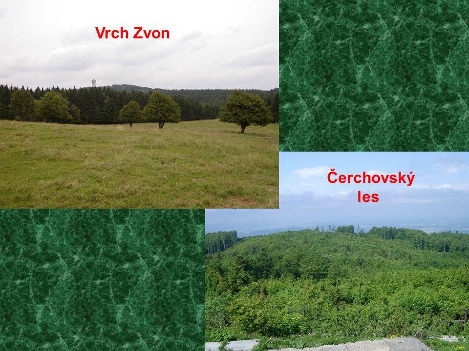 Vrch Zvon Čerchovský les