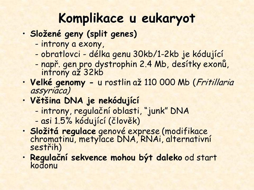 Komplikace u eukaryot Složené geny (split genes) - introny a exony,