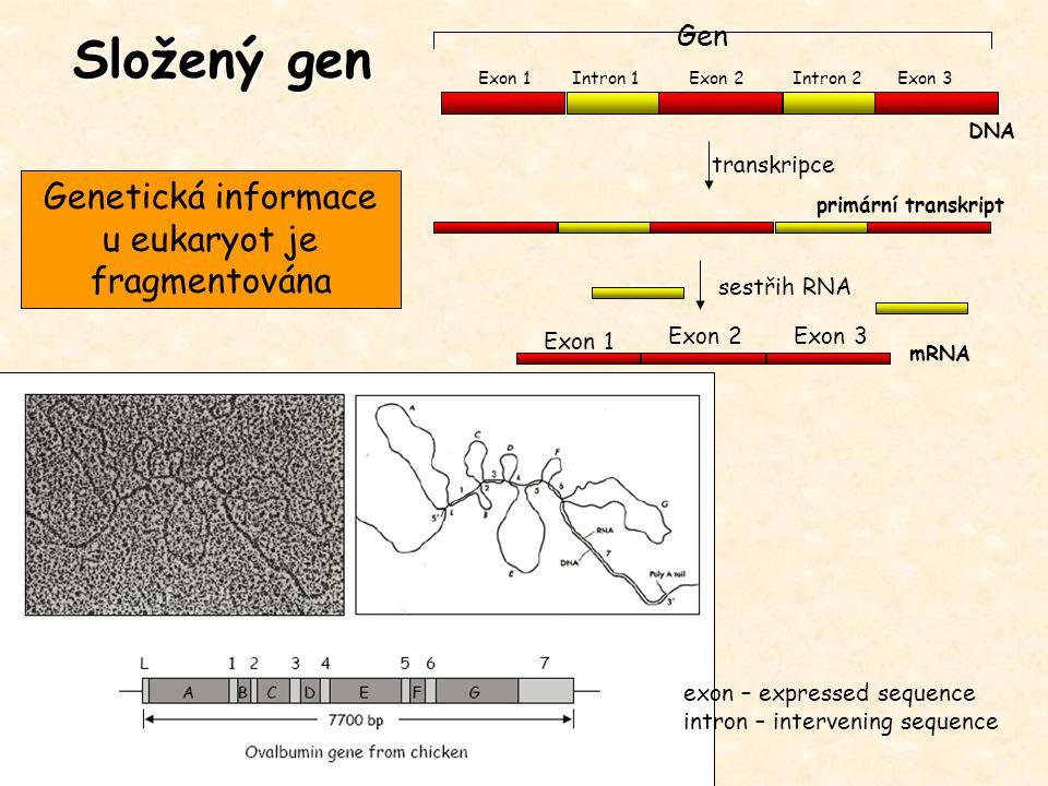 Genetická informace u eukaryot je fragmentována