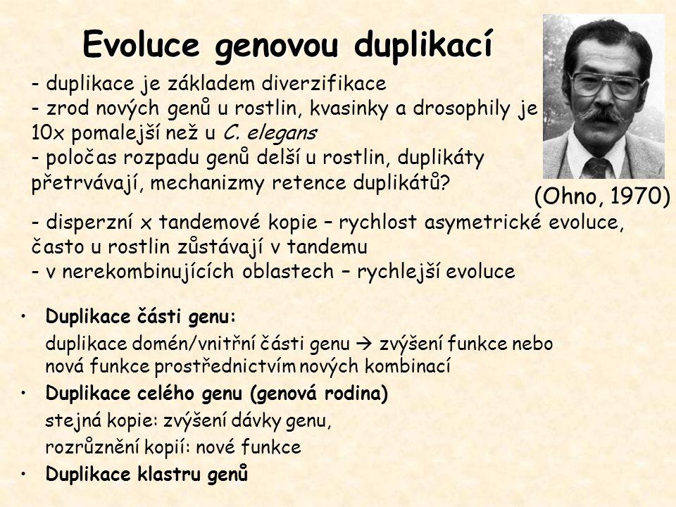 Evoluce genovou duplikací